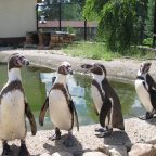 Экскурсия в парк птиц